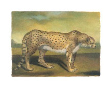 Cheetah poster print by Denise Crawford