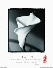 Beauty-Calla Lily poster print by  Motivational