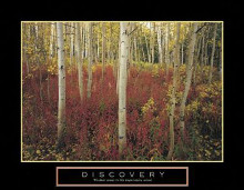 Discovery - Aspen Trees poster print by Craig Tuttle