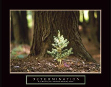 Determination - Little Pine poster print by  Unknown