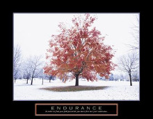 Endurance - Fall Tree poster print by Craig Tuttle