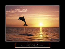 Goals - Dolphins poster print by Craig Tuttle