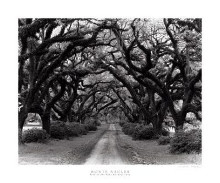 Path In The Oaks #2, Louisiana poster print by Monte Nagler