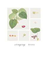 Stinging Trees poster print by Ferdinand Bauer