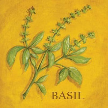 Basil poster print by Kate McRostie