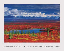 Alaska Tundra In Autumn Glory poster print by Anthony Cook