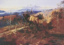Elk poster print by Charles M Russell