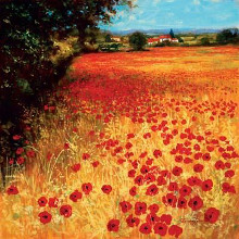 Field Of Red And Gold poster print by Steve Thoms