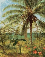Palm Tree, Nassau 1892 poster print by Albert Bierstadt