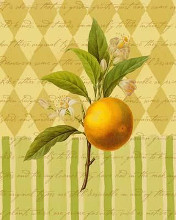 Botanical Orange poster print by  Studio Voltaire