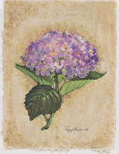 Blooming Hydrangea poster print by Peggy Abrams