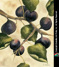 Italian Harvest - Figs poster print by Doris Allison