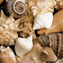 Beachside Shells poster print