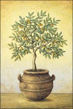 Green Olive Tree poster print by John Park