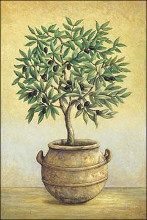 Black Olive Tree poster print by John Park