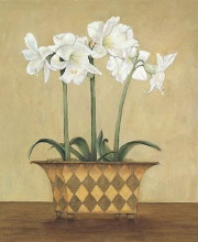 Amaryllis In Checkered Vase poster print by John Park