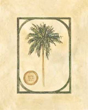 Date Palm poster print by David Nichols