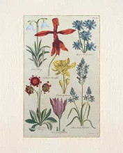 Botanical Studies II poster print by  Antiques
