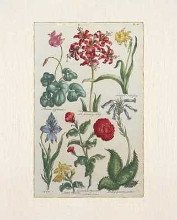 Botanical Studies VI poster print by  Antiques