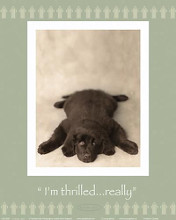 I'm Thrilled...Really poster print by Rachael Hale