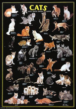 Cats poster print by  Anonymous