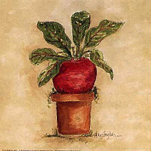 Beet poster print by Mary Hughes