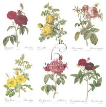 Roses (Set Of Six) poster print by  Redoute