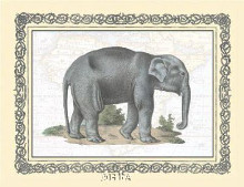 Elephant poster print by Exotic - Anon Animals