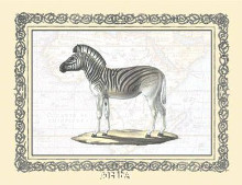 Zebra poster print by Exotic - Anon Animals