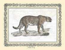 Jaguar poster print by Exotic - Anon Animals