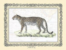 Leopard poster print by Exotic - Anon Animals
