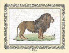 Lion poster print by Exotic - Anon Animals