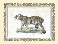 Tiger poster print by Exotic - Anon Animals