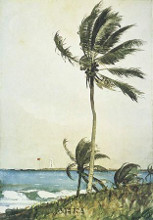 Palm Tree, Nassau poster print by Winslow Homer