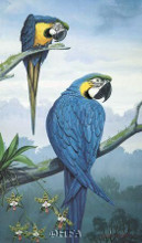 Blue And Gold Macaw poster print by Jules Scheffer