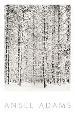 Pine Forest In The Snow, Yosemite Nation poster print by Ansel Adams