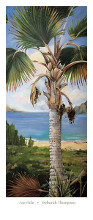 Fan Palm poster print by Deborah Thompson