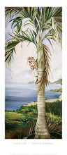 Kohala Palm poster print by Deborah Thompson