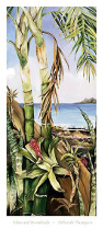 Palms And Bromeliads poster print by Deborah Thompson