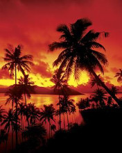 Beach Sunset In Fiji poster print by  Unknown