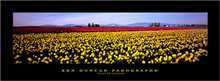 Fields of Sunshine poster print by Ken Duncan
