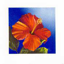 Crimson Red - Hibiscus poster print by Karen Foley