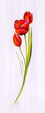 Tulip Red III poster print by Karen Foley