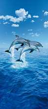 Three Dolphins poster print by  Mural