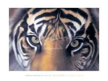 Eyes Of The Goddess: Sumatran Tigress poster print by Charles Alexander