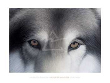 Eyes Of The Hunter: Gray Wolf poster print by Charles Alexander