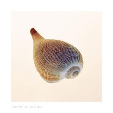 Fig Shell poster print by  Artin