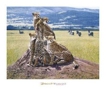 Cheetah Watch poster print by John Banovich