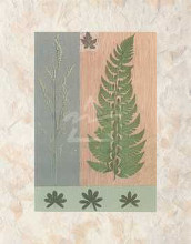 Green Fern poster print by Denise Duplock