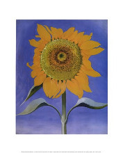 Sunflower, New Mexico, 1935 poster print by Georgia O'Keeffe